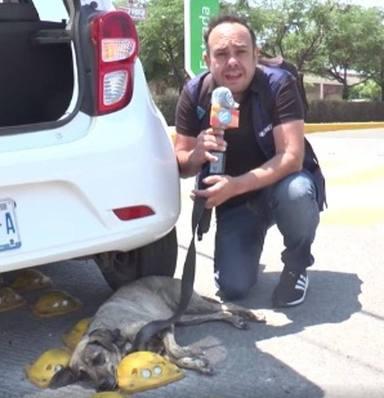 Abandonan a un perrito en mitad de la autopista y lo que pasa después emociona a todo el mundo