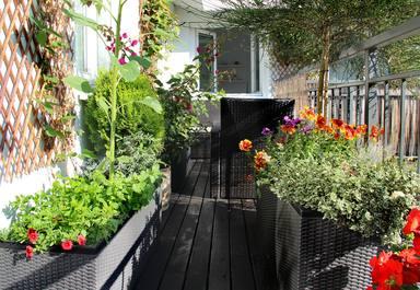 Esta es la forma de hacer un huerto en la terraza con los consejos de un experto