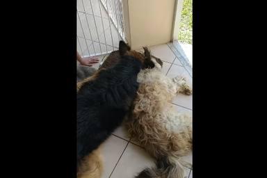 Un perro piensa que su compañero ha muerto y su reacción emociona a todos