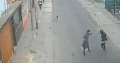 Un perro detecta un atraco en la calle y su reacción le convierte en un héroe