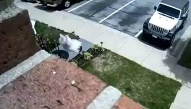 Un perro sale volando por la ventana y lo que sucede después deja a todos sin palabras