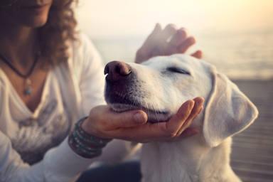 ¿Cómo puedo proteger a mi perro de la leishmaniosis?
