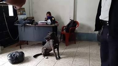 Detienen a una persona por saltarse el confinamiento y lo que hace su perro deja a todos sin palabras