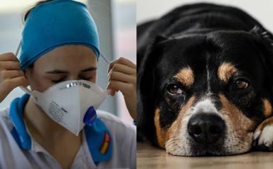 La conmovedora reacción de un perro al ver de nuevo a su dueña enfermera que ha emocionado a todos