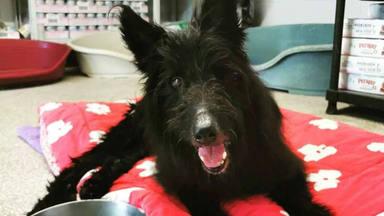 Descubre que su perrito está enfermo y la reacción de la mascota deja aed.agilecontent.com/resources/jpg/8/0/1