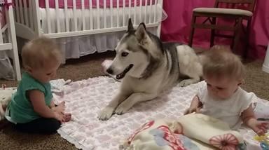 Dos bebés no paran de molestar a su perro hasta y acaba ocurriendo lo inevitable
