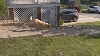 Encuentran a un perrita perdida en la calle y al llevarla al veterinario se quedan en shock