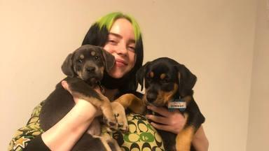 ctv-3ip-billie-eilish-puppies