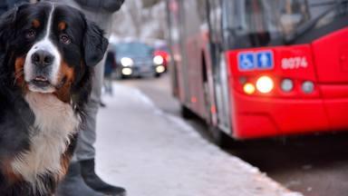 Un perro viaja todos los días en autobús y la tierna explicación ha emocionado a todo el mundo