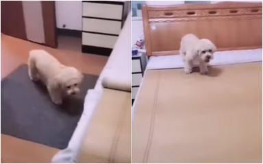 Un perrito se echa la siesta todos los días y su forma de hacerlo le convierte en viral