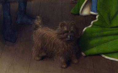 Un accidente de coche golpea a un perro y la reacción de su hermano conmueve a todo el mundo