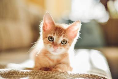 El secreto que hay detrás de los ronroneos de los gatos