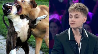 Un concursante de 'Operación Triunfo' defiende las peleas de perros y las redes reaccionan así