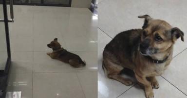 Un perro acude todos los días al hospital durante tres meses y el motivo rompe el corazón de todos