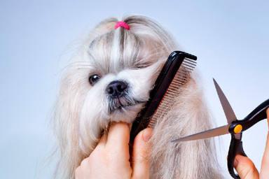 El tremendo error que cometes al cortar el pelo a tu perro y que pone en riesgo su salud