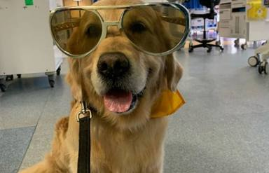 Un niño hospitalizado con un pronóstico muy grave conoce a un perro y sucede algo totalmente inesperado