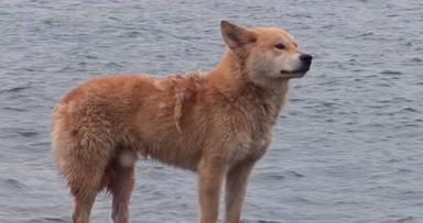 Una mascota sufre el ataque de tres perros y lo ocurrido deja a todos sin palabras