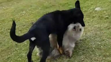El perro de unos excursionistas se topa con un oso en medio del monte y lo que ocurre deja a todos en shock