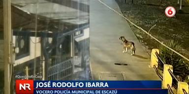 Un perro sin hogar presencia un robo y su reacción sorprende a todo el mundo