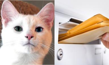 Llega un sobre a nombre de un gato que lleva muerto 12 años y los dueños no dan crédito al contenido