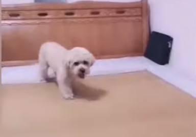 Un perro se echa la siesta todos los días y su forma de hacerlo deja a todo el mundo con la boca abierta