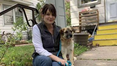 Un perro recorre más de 50 kilómetros por un motivo que ha emocionado a todos los vecinos
