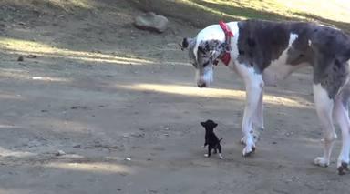 Un perrito se escapa de la perrera y el lugar en el fue encontrado dejó a todos en shock