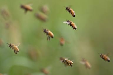ctv-ewq-abejas-datos-sorprendentes-2