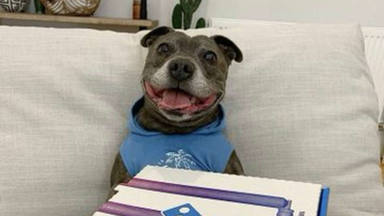 Un perro recibe una pizza de parte de su dueño y al abrir la caja se decepciona para siempre