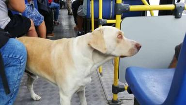 Un perro se sube todos los días al autobús y la tierna explicación hace emocionarse a todos
