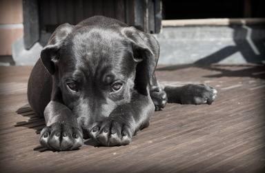 Un cachorro abandonado llega a una perrera y su extraño pelaje deja a todos en shock