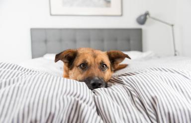 Las cuatro claves que debes conocer si duermes con tu mascota