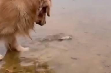 Un perro se convierte en un héroe al intentar salvar a un pez que estaba atrapado en la orilla