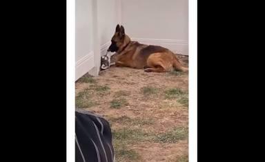 Un perro se reencuentra con su amigo y su reacción emociona a todos