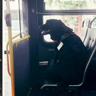 Pedro del Castillo te cuenta la historia de Eclipse, el perro que viaja solo en bus para ir al parque
