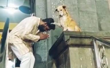 Un perrito callejero espera cada día en la puerta de una iglesia y su reacción deja a los vecinos sin palabras