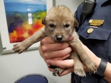 """Un """"perrito"""" abandonado es encontrado en la calle y las pruebas de ADN hacen saltar las alarmas"""