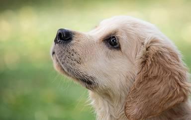 Un perro descubre la enfermedad de su dueño y su reacción se ha hecho viral en todo el mundo