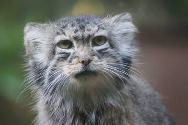 """Localiza a un """"gatito"""" en su granja y las pruebas de ADN le dejan en shock"""
