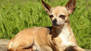 Buscan a la familia de un perro callejero y lo que descubren les deja boquiabiertos