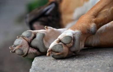 Evita las quemaduras en las patas de tu perro este verano con estos sencillos consejos