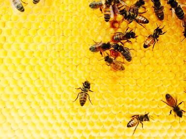 ctv-s3m-abejas-datos-sorprendentes-3