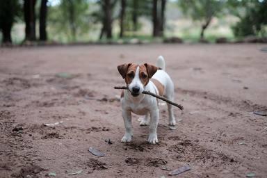 Perrito en el campo