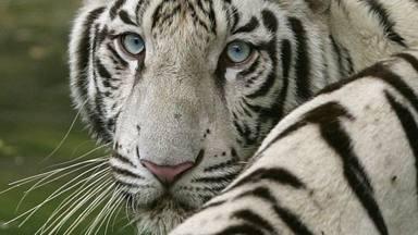 Siete curiosidades del mundo animal que probablemente desconozcas
