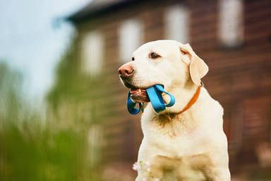 Las tres claves imprescindibles para evitar que tu perro tire de la correa mientras paseas por la calle