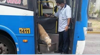 Un perro se sube cada día al autobús y la explicación rompe el corazón de todos