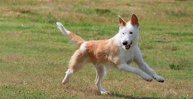 El arriesgado rescate de este perro te hará morir de amor