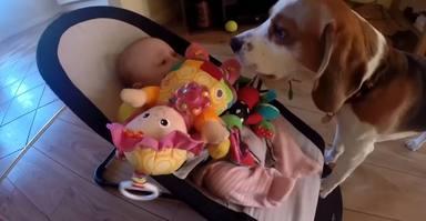 Un perro le roba un juguete a un bebé y su reacción deja con la boca abierta a la familia