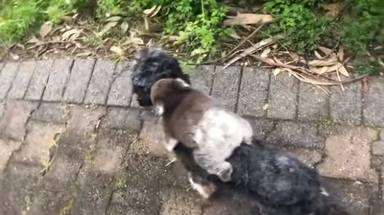 """Un perro vuelve a su casa con un """"cachorrito"""" y al examinarlo se quedan atónitos"""