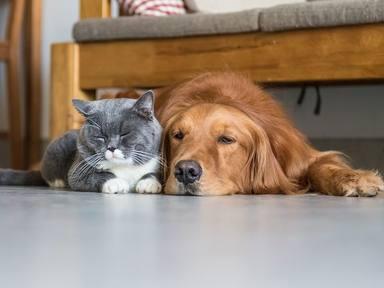 ¿Cuáles son los cinco accidentes domésticos más frecuentes que sufren las mascotas?